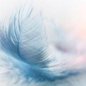 Représentation d'une plume, symbole de la légèreté, de la spiritualité et du monde divin, important au cœur de Pascal BROTONS, lorsqu'il prodigue ses soins esséniens, à son centre d'éveil spirituel de Nîmes.